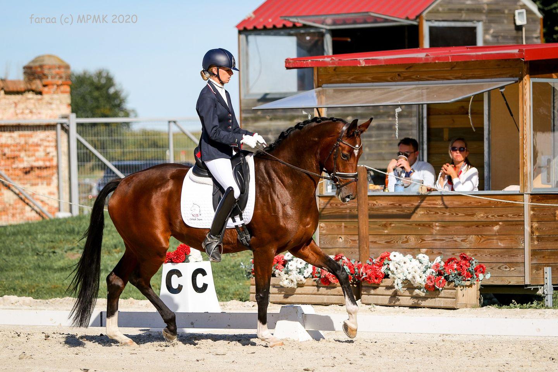 Kasztanowy koń na zawodach